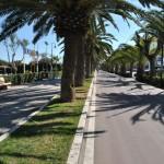 Riviera Adriatica delle Palme